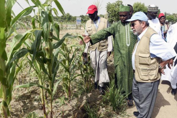 Bassin du lac Tchad : La FAO préconise des investissements dans l'agriculture