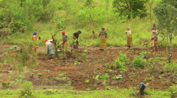 Autosuffisance alimentaire en Afrique :La science au cœur d'un agenda continental