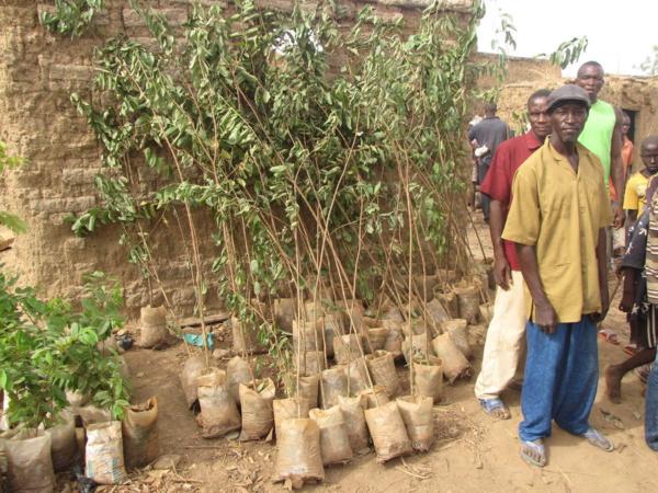 Protection de l'environnement : 165 pieds d'arbres pour verdir la Place Rotary International de Bamako