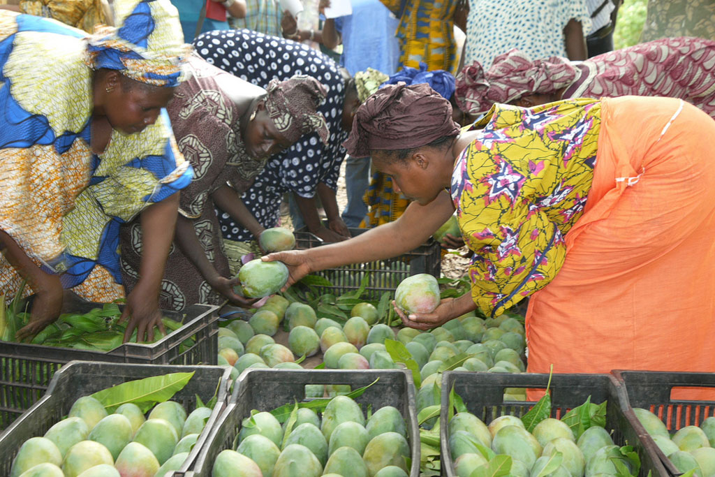 De plus en plus populaires, les fruits tropicaux représentent une opportunité pour les pays en développement selon la FAO