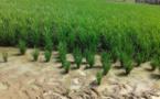 Mali : La BOAD accorde 5 milliards pour le Programme de Développement de l'Irrigation