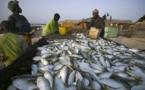 Secteur pêche : La tutelle ambitionne 5316 tonnes de poissons d'ici 2018