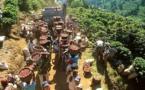 Agriculture : Le cacao et le café en baisse de production