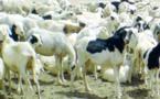 Elevage: Le Mali fixe le cadre du Projet régional d'Appui au Pastoralisme