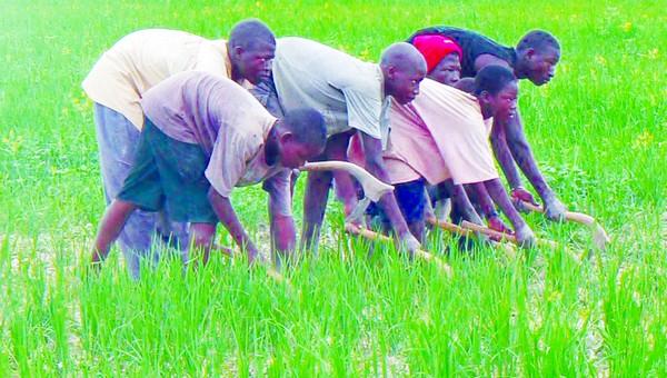 Agriculture : 15 milliards FCFA pour la reconversion du périmètre de Soké