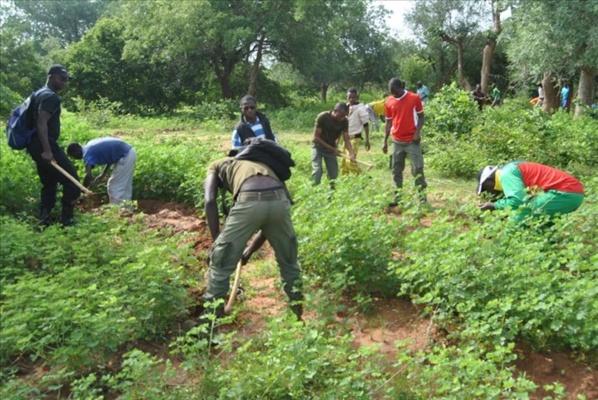 Plan National d'investissement forestier : Les experts en conclave à Bamako pour sa validation