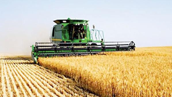 Blé tendre français : La production attendue à 1017,1 Millions de tonnes