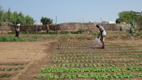 Agence d'aménagement des terres et de la fourniture de l'eau d'irrigation : Le défi de promouvoir le développement durable