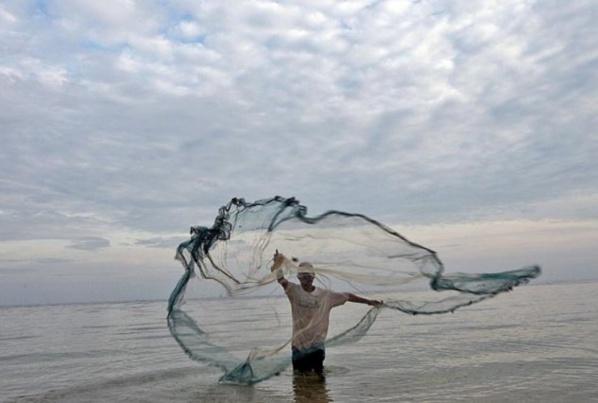 La FAO prévoit une hausse importante de la production de poissons pour les 10 prochaines années