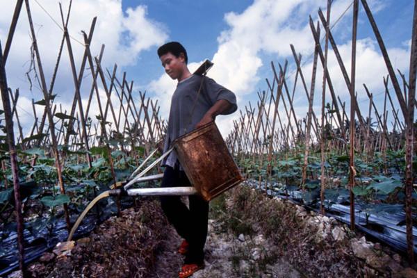 La réduction des risques de catastrophes dans l'agriculture est avantageuse pour les petits exploitants