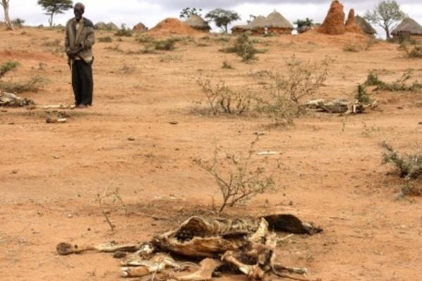 Programme d'urgence COVID-19 : Le BMZ assure les pays africains contre la sécheresse