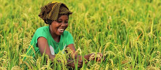 L'Afrique est plus résiliente qu'on ne le croit