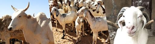 Renforcement de la productivité et de la résilience des systèmes pastoraux au Sahel : La Banque mondiale approuve un nouveau financement de 375 millions de dollars