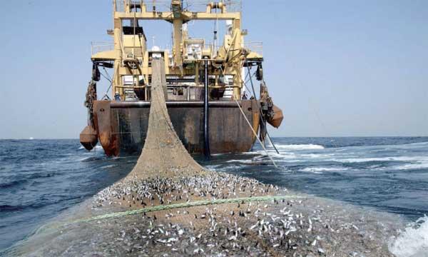 Afrique de l'Ouest : Greenpeace demande l'arrêt de l'industrie de la farine et de l'huile de poisson
