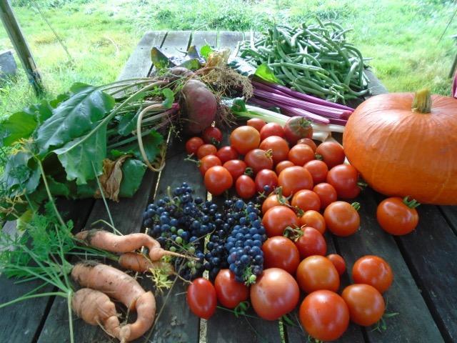 L'alimentation et l'agriculture sont essentielles à la réalisation de l'ensemble des ODD, selon la FAO