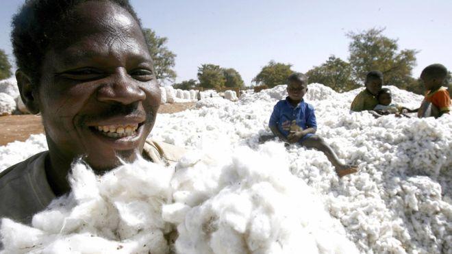 17è Journées annuelles de l'A.C.A  à Bamako: Le coton africain sera au cœur des échanges