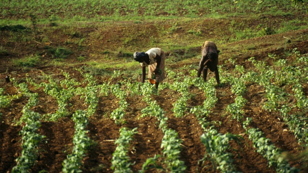 Agriculture: Un rapport préconise la numérisation pour améliorer la délivrance de subventions agricoles et la productivité en Guinée, au Mali et au Niger