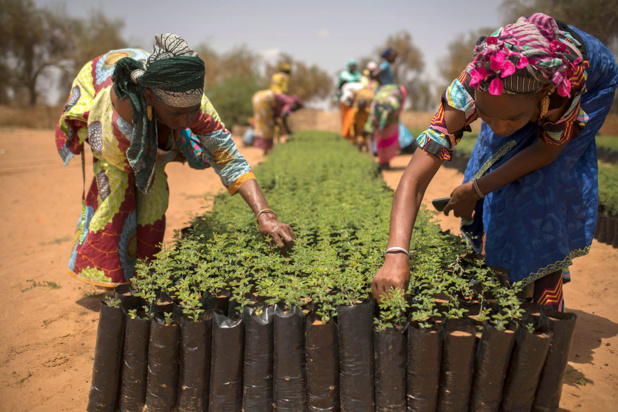 Photo/Noor pour FAO/Benedicte Kurzen A Koyli Alpha, au Sénégal, des femmes de la communauté travaillent dans des pépinières créées dans le village dans le cadre de l'Initiative de la Grande muraille verte qui vise à améliorer la vie des populations et la durabilité des terres.