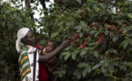 Femme, africaine et agricultrice, face au changement climatique : Oxfam tire la sonnette d'alarme