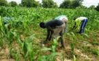 Agriculture : Plus de 52 milliards FCFA prévus pour accroître la production
