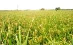 Emplois pour jeunes ruraux : L'approche novatrice de la FAO axée sur le partenariat public-privé