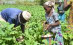 Programme d'appui au sous-secteur de l'irrigation : Le défi de développer le secteur  agricole au Mali