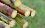 Sucre blanc: La production en hausse de 5,3 Millions de tonnes