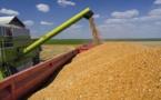 Blé tendre français : L'USDA table sur une production de 1005,8 Millions de tonnes