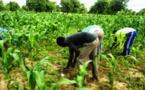 Agriculture : Le Programme de Productivité Agricole en Afrique de l'Ouest s'autoévalue
