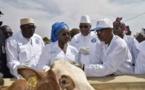 Élevage au Mali : Le secteur  pourvoit au pays 15 % de ses recettes d'exportation