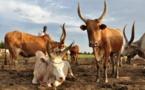 Sous-secteur élevage au Mali : Renforcer les capacités du  CNIA pour promouvoir le développement socio-économique