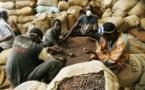 Zone Uemoa : 137.726 de tonnes de café produites en 2018