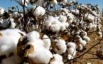 Nouvelle route du coton : Un projet de valorisation du coton du Mali au Canada