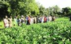 La visite dans un champ lors de la Journée de la femme rurale
